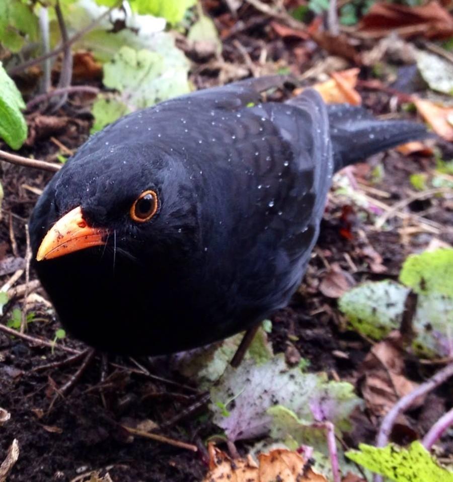 Regular visitor to the Garden